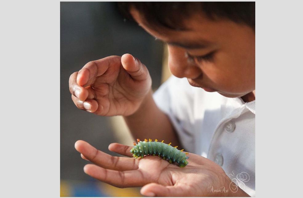 1 worm