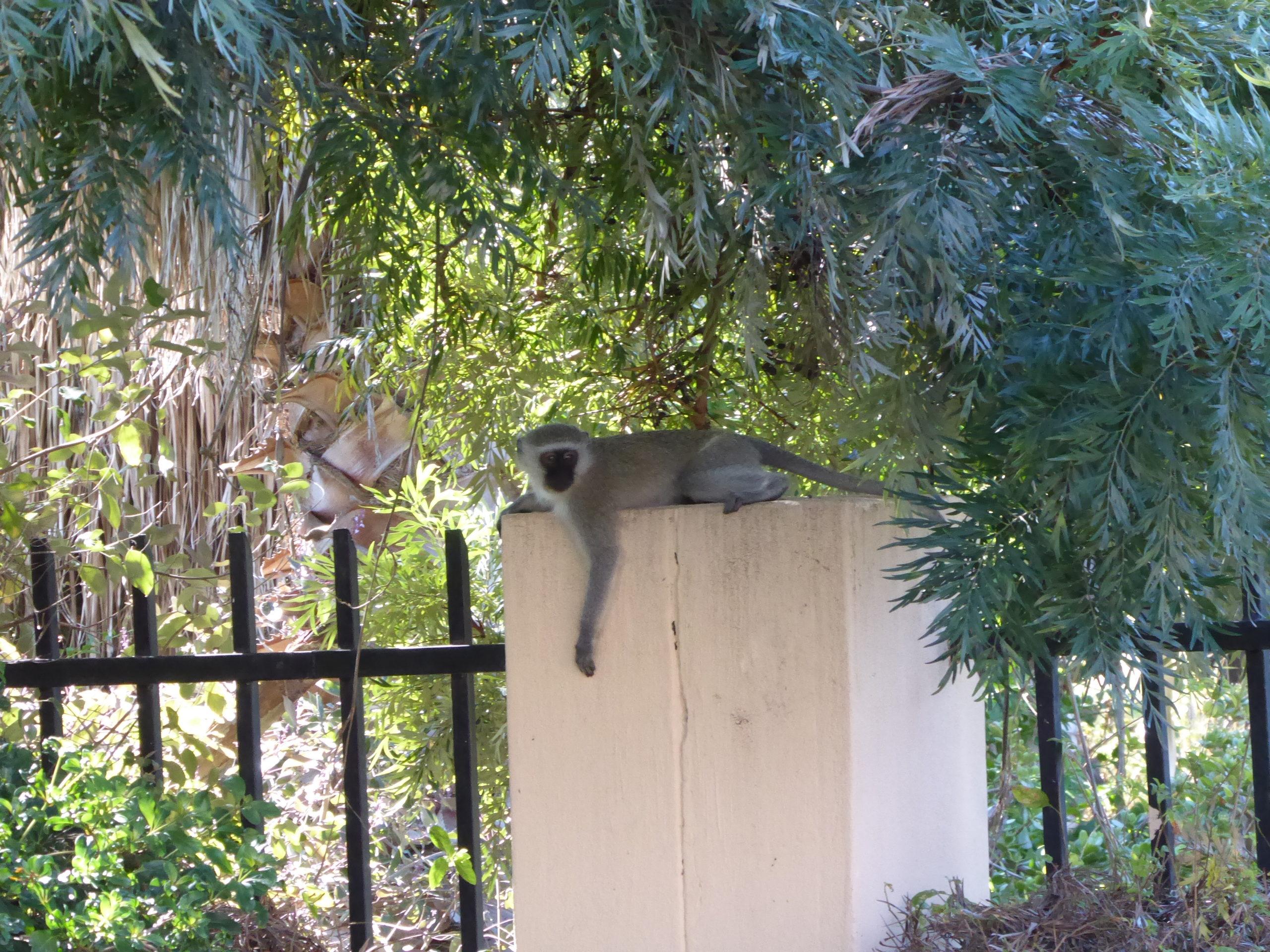 2 monkey