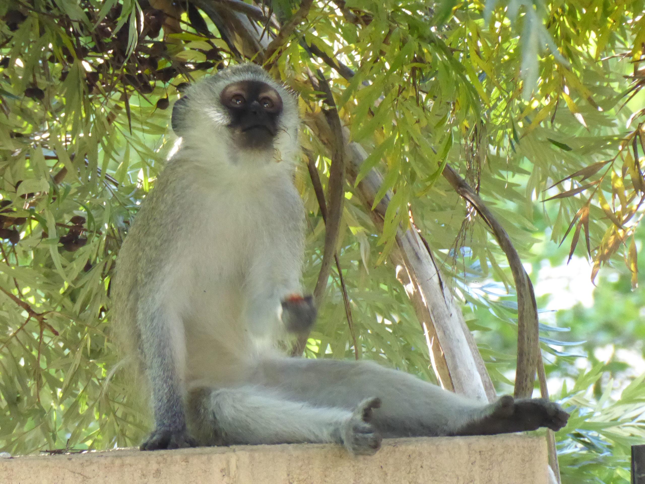 4 monkey