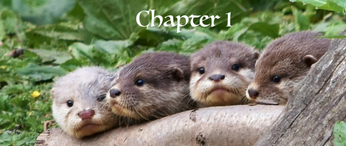 Weavers and Otters