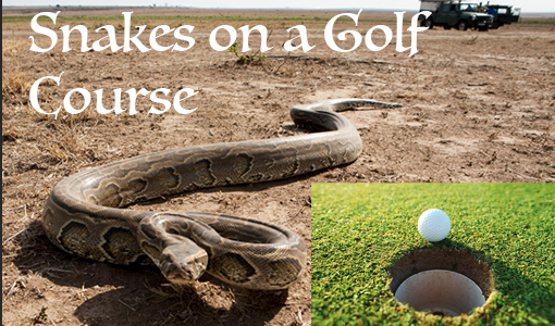 Snakes on a Golf Course #4